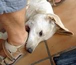 http://www.pergaminovirtual.com/blogs/uploads/p/Primicias13/17321.jpg